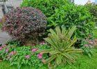 grow garden plants faster