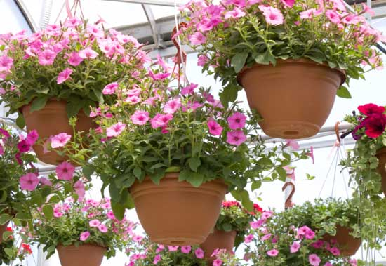 hanging-baskets-garden