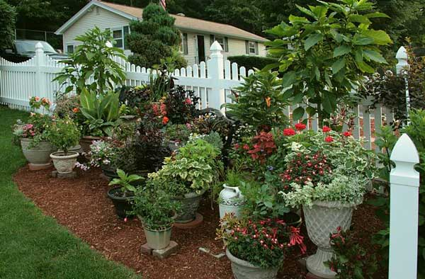 Container Garden Design Ideas stunning low budget container gardens hgtv Large Container Gardening