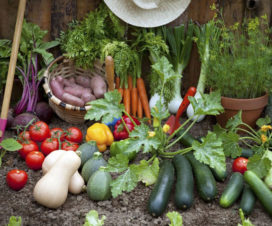 vegetable plants to grow