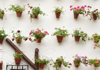 organic-container-gardening