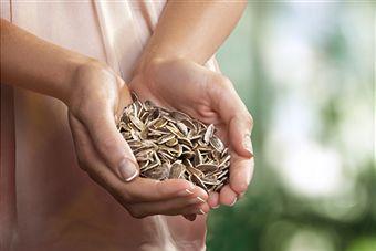 seeds-for-garden